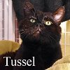 Tussel was adopted from the Cat House and Adoption Center on Friday, August 5, 2016