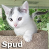 Spud was adopted from the Cat House and Adoption Center on Saturday, July 30, 2016.<br /> <br /> Spud<br /> <br /> You say potato and I say potahto.<br /> <br /> We'll compromise and call him Spud. He is quick to purr and cute as a button and not starchy in the slightest. You can't help but fall in love with his charm and he can't help but fall in love with you.