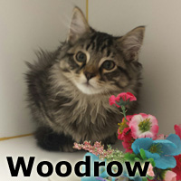 Woodrow was adopted from the Cat House and Adoption Center on Saturday, August 13, 2016.
