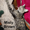 Misty Brown was adopted from the Cat House and Adoption Center on Saturday, January 2, 2016.<br /> <br /> Misty Brown<br /> <br /> Feeling content.<br /> <br /> Living life with an unexpected change is difficult and when you don't like change, challenges make you stronger. When your human moves away and you are left in charge, something is not right. Misty wants her world to be right again and be loved like there's no tomorrow.