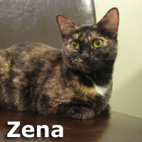 Zena was adopted from the Cat House and Adoption Center on Saturday, January 2, 2016.
