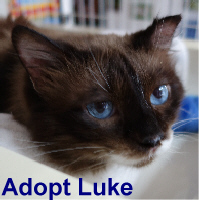 Luke was adopted from the Cat House and Adoption Center on Saturday, June 4, 2016.