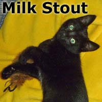 """Milk Stout was adopted from the Cat House and Adoption Center on Saturday, November 21, 2015. <br /> <br /> Milk Stout<br /> <br /> Full of sweetness!<br /> <br /> Do you need someone to love? Milk Stout to the rescue! She is a super-sweet little lady who is never too busy to grace you with her affection. Her favorite pastimes are grooming her humans' """"fur"""" and cuddling with her siblings on a warm lap. She would love to go home with one of her loving brothers."""