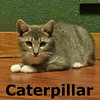 Caterpillar was adopted from her foster home on Friday, August 13, 2016 at South Bay Animal Hospital.