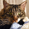 Rumba Reese was adopted from the Cat House and Adoption Center on Saturday, May 21, 2016.