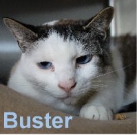 Buster was adopted from the Cat House and Adoption Center on Saturday, January 30, 2016.