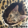 River Louisa was adopted from the Cat House and Adoption Center on Saturday, June 4, 2016.