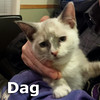 Dag was adopted from her foster home at Steamboat Animal Hospital on Monday, January 4th, 2016.