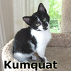 Kumquat was adopted from the Cat House and Adoption Center on Saturday, August 20, 2016.<br /> <br /> Kumquat<br /> <br /> Sweet inside and out. She's a busy little bee who likes to buzz around to check out all of her toys, but who likes to take some time to stop for a cuddle.