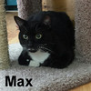 Max was adopted from the Cat House and Adoption Center on Saturday, May 21, 2016.