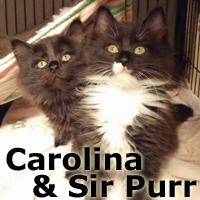 Carolina and Sir Purr (sister and brother) were adopted together from the Cat House and Adoption Center on Saturday, January 30, 2016.