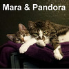 Mara and Pandora (daughter and mother) were adopted from the Cat House and Adoption Center on Saturday, May 14, 2016.<br /> <br /> Pandora and Mara<br /> <br /> On the radio ....<br /> <br /> Your favorites are here. Tune in and listen to the soft beats and warm rhythm that the love of these two will provide. This dynamic duo is in sync and will be performing for you personally and forever as they warm your heart and entertain you for hours with their daily performances.