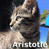 Aristotle was adopted from her foster home on Monday August 29th, 2016.