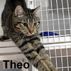 Theo was adopted from the Cat House and Adoption Center on Saturday, November 21, 2015.<br /> <br /> Theo<br /> <br /> Home alone?<br /> <br /> Do you need a companion to fill the void in your life? Theo is here and ready to please with his outgoing sweet nature. He is uber sweet and utterly handsome, young and playful.