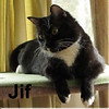 Jif was adopted from his foster home on Friday, January 27, 2017.