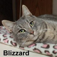 Blizzard was adopted from the Cat House and Adoption Center on Saturday, January 7, 2017.<br /> <br /> Blizzard<br /> <br /> Supreme love.<br /> <br /> Add a loving hand, a warm lap or arms surrounding this special Blizzard and you have a heart full of happiness. Blizzard is a gentle boy craving his own special blend of happiness and a home to live forever.