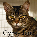 Gypsy June was adopted from the Cat House and Adoption Center on Saturday, January 7, 2017.