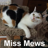 Miss Mews was adopted from the Cat House and Adoption Center on Saturday, October 8, 2016.<br /> <br /> Miss Mews<br /> <br /> One path ...<br /> <br /> Abandoned after years in one life and a trip across country, leaves me anxious to get onto a new life. This delightful lady is gorgeous, loving and ready for the next chapter and sunshine (even on a rainy day). What does your crystal ball show you? ... me?