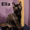 Ella was adopted from her foster home at Steamboat Animal Hospital on Thursday, January 26, 2017.