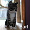 Earl was adopted from his foster home at Steamboat Animal Hospital on Wednesday, June 21, 2017.