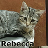 Rebecca was adopted from her foster home at Hawks Prairie Veterinary Hospital on Monday July 17, 2017.