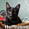 Harry, Hermione and Hagrid (siblings) were adopted together from their foster home at Streamboat Animal Hospital on Sunday August 6, 2017.