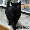 Bishop was adopted from the Cat House and Adoption Center on Saturday, April 7,  2018.<br /> <br /> Bishop<br /> <br /> Ruggedly handsome and initially hesitant.<br /> <br /> A big muscular guy with a soft and sensitive side. Loves to be noticed and scratched while being talked to and he has a big heart waiting to explore the new world that lies ahead.