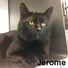 Jerome was adopted from the Cat House and Adoption Center on Saturday, June 3, 3017.<br /> <br /> Jerome<br /> <br /> A lover, not a fighter.<br /> <br /> Jerome is always ready for attention and is a gentle and kind soul. Off the streets and into our hearts, he is ready to win your heart. Come in and meet this distinguished gentleman.
