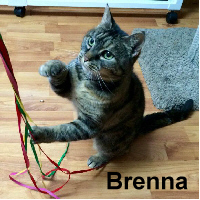 Brenna was adopted from the Cat House and Adoption Center on Saturday, February 4, 2017.<br /> <br /> Brenna<br /> <br /> Single child syndrome.<br /> <br /> Brenna is a bit bashful and certainly lets you know that she wants it her way ... except at dinner or treat time and then her presence is known to all. She is a darling little lady that put her past behind her and she is ready to venture into a new life.