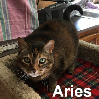 Aries was adopted from the Cat House and Adoption Center on Saturday, July 8, 2017.<br /> <br /> Aries<br /> <br /> Stars are aligned.<br /> <br /> This precious lady is ready for stability. Aries is sweet and loving and would blossom in a quiet home with love. If you want to curl up and read a book, she would be happy to be by your side.