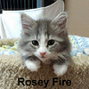 Rosey Fire was adopted from the Cat House and Adoption Center on Saturday, July 29, 2017.
