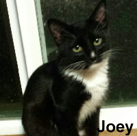 Joey was adopted from his foster home at South Bay Animal Hospital on Tuesday, April 11, 2017.