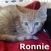 Ronnie was adopted from his foster home at South Bay Veterinary Hospital on Wednesday July 5, 2017.