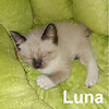 Luna and Artemis (sisters FIV+) were adopted through their foster home at the Cat House and Adoption Center on Saturday, June 3, 2017.