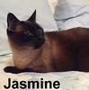 Jasmine was adopted from the Cat House and Adoption Center on Saturday, February 4, 2017.