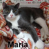 Maria was adopted from the Cat House and Adoption Center on Wednesday, January 11, 2017.<br /> <br /> Maria<br /> <br /> My Maria<br /> <br /> Are you looking for a dainty little darling to lavish with love and attention? Maria is a dear sweet girl, ready to venture into the next chapter of her life and start the year out in a new home.