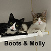 Boots and Molly (sisters) were adopted from Steamboat Animal Hospital on Tuesday, August 1, 2017.<br /> <br /> Boots and Molly<br /> <br /> Adopted as babies, turned out as teens.<br /> <br /> Curious and sweet, they haven't missed a beat. Happy for anyone to love them, they would settle in quickly and provide unconditional love and endless entertainment. Come meet these sisters.