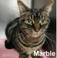 Marble was adopted from Steamboat Animal Hospital on Friday, March 24, 2017.