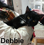 Debbie was adopted from the Cat House and Adoption Center on Saturday, February 4, 2017.