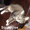 Squiggles was adopted from the Cat House and Adoption Center on Saturday, February 11, 2017.<br /> <br /> Squiggles<br /> <br /> Alert and Curious.<br /> <br /> Squiggles is delightful. She loves to sit on laps, knead and sleep. She talks a lot when she's playing, and very interactive with string toys and laser pointers. Smart, alert, and curious to new things and sounds.