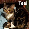 Teal was adopted from the Cat House and Adoption Center on Saturday, January 7, 2017.<br /> <br /> Teal<br /> <br /> Magenta, Fushia, Tangerine and adorable.<br /> <br /> This beauty is a sweet young lady. Abandoned, rescued and ready to find a home that appreciates her vivid personality and loving companionship. Teal is darling and will fill your home with her mellow tenderness.