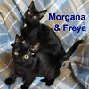 Morgana and Freya (sisters) were adopted from the Cat House and Adoption Center on Saturday, November 19, 2016.