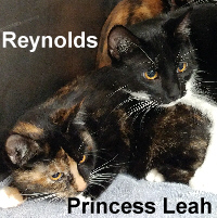 Princess Leah and Reynolds (siblings) were adopted from the Cat House and Adoption Center on Saturday, January 28, 2017.
