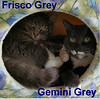 Gemini Grey and Frisco Grey were adopted from the Cat House and Adoption Center on Saturday, July 8, 2017.<br /> <br /> Frisco and Gemini Grey<br /> <br /> Bonded beauties.<br /> <br /> These two little ladies are just asking for a chance to be the key that could open your heart and bring a family together. Still young, playful, and will add a new dimension to your home that you had no clue was missing. Come meet Frisco Grey and Gemini Grey.