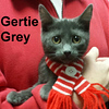 Gertie was adopted from the Cat House and Adoption Center on Saturday, January 21, 2017.
