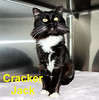 Cracker Jack was adopted from the Cat House and Adoption Center on Saturday, January 17, 2017<br /> <br /> Cracker Jack<br /> <br /> Cracker Jack has transformed from a scrawny little cat to a magnificent, fluffy and sassy boy with soft and beautiful long hair. He is always curious especially when it comes to food and he definitely lives up to his name-Cracker Jack, an all American snack with a prize on the inside. He is ready and eager to take charge of a new home where he is spoiled and loved.