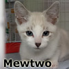 Mewtwo and Meowth (brothers) were adopted from the Cat House and Adoption Center on Saturday, September 24, 2016.