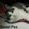 Sweet Pea was adopted from the Cat House and Adoption Center on Saturday, December 9, 2017.