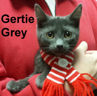 Gertie Grey was adopted from the Cat House and Adoption Center on Saturday, April 22, 2017.
