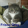 Frisco Grey and Gemini Grey were adopted from the Cat House and Adoption Center on Saturday, December 10, 2016.